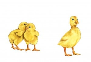Chicks Illustration