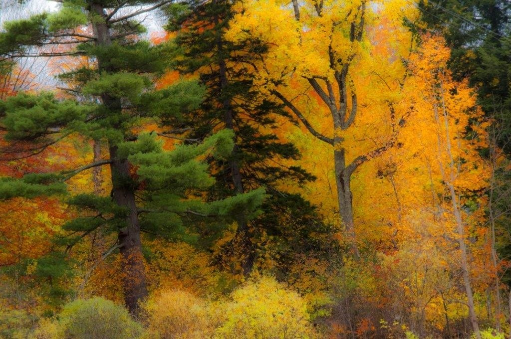 Peak foliage color in southern Vermont