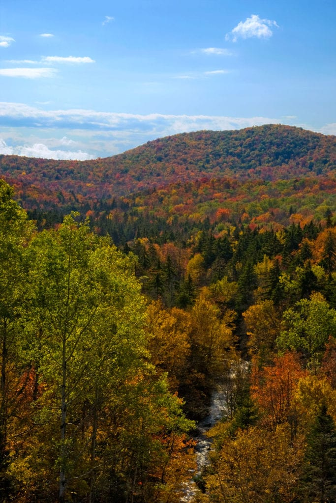 624h6871_fall_09_foliage