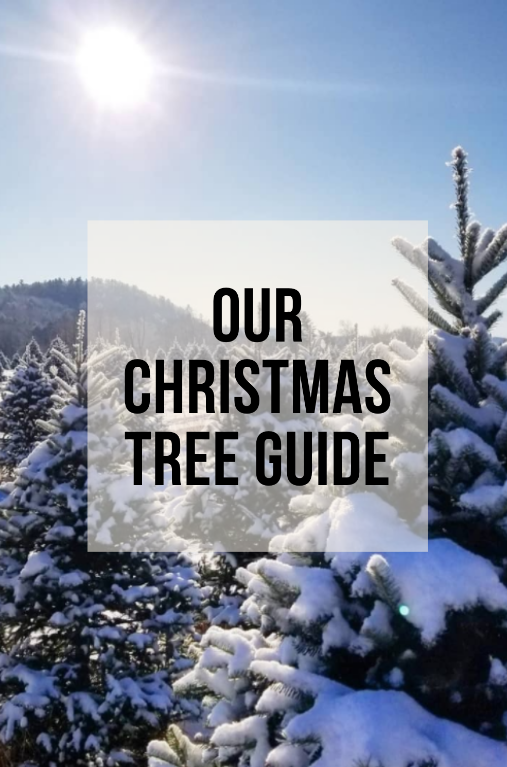 our christmas tree guide